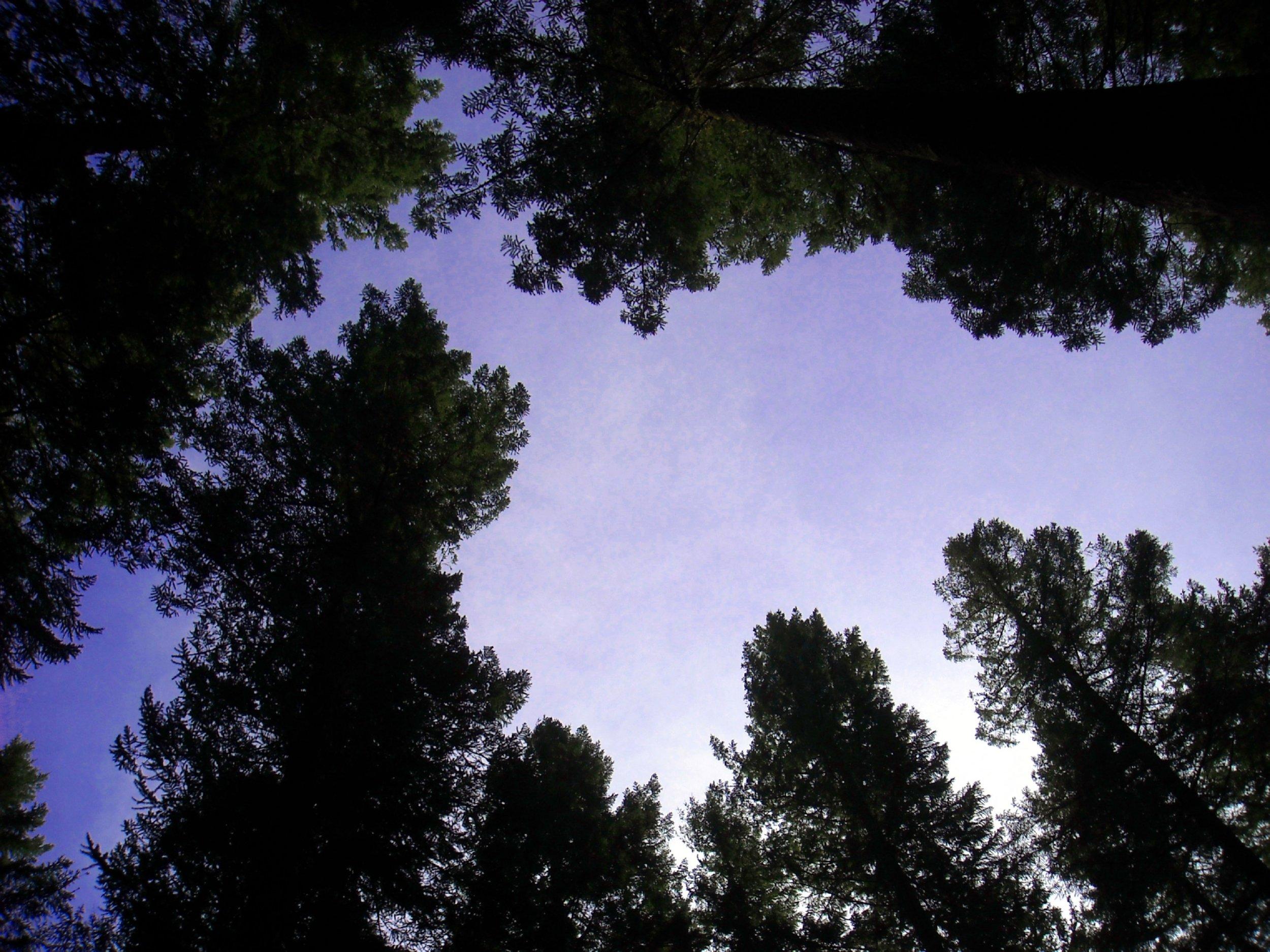 Looking up Washington State