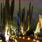 Saguaro Cactus among the pathways at the Desert Botanical Gardens
