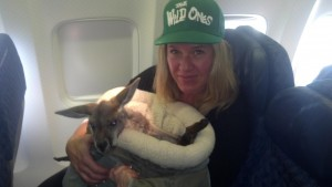 Diesel on the plane with Kangaroo Lanie