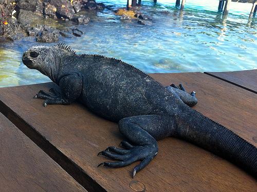 Didrik Johnck Galapagos