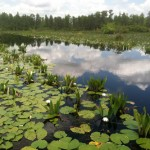 Okefenokee Swamp Chesser Prairie