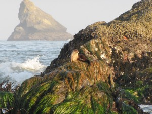 Otter Rainbow Rock Beach