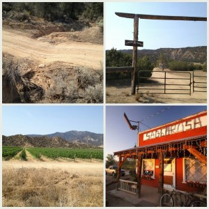 Runnels_vineyards_Sagebrush Annies