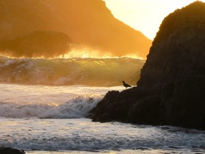Wave breaking off of Bird Island