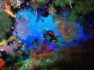 http://blog.discoverqueensland.com.au/scuba-dive-the-great-barrier-reef/