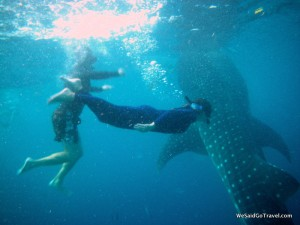 Whale Shark George Lisa