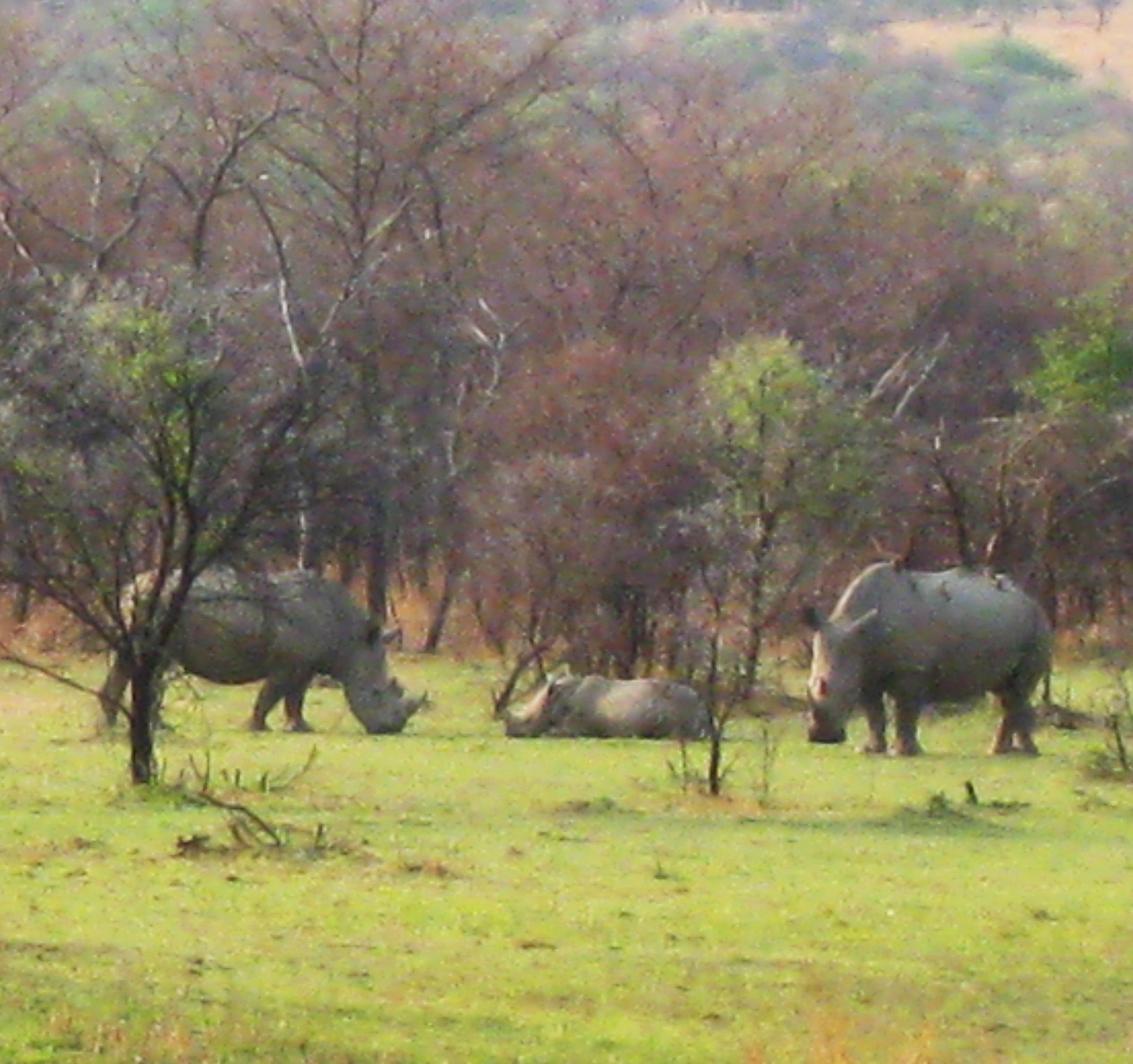 Borakalalo Rhinos