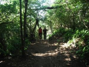 Mt Kau Kau - photo courtesy of Sams Hiking