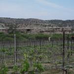 Wine Country Arizona