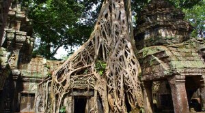 cambodia-temple-engulfed-by-nature