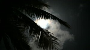 stock-footage-full-moon-on-a-tropical-night-silhouette-palm-trees