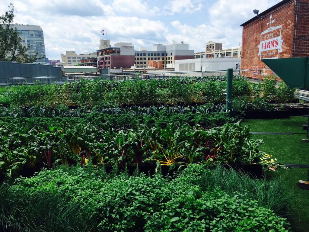 Fenway Farms, a rooftop garden. (Photo by Scott Bridges)