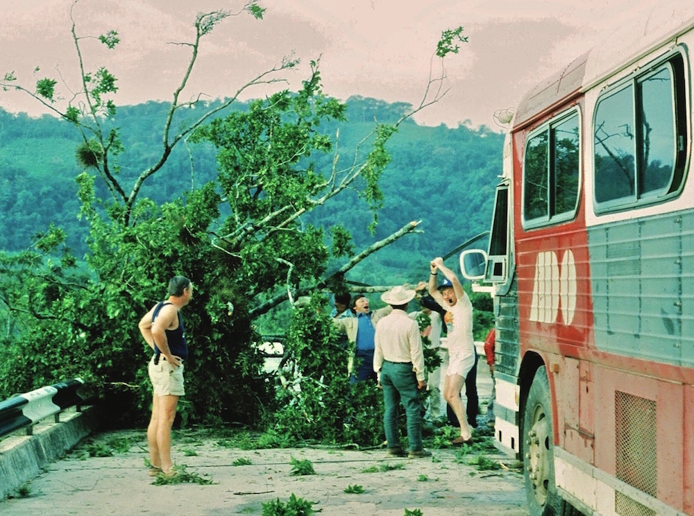 Fallen tree on the highway.