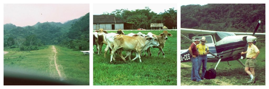 Cessnas-Cows