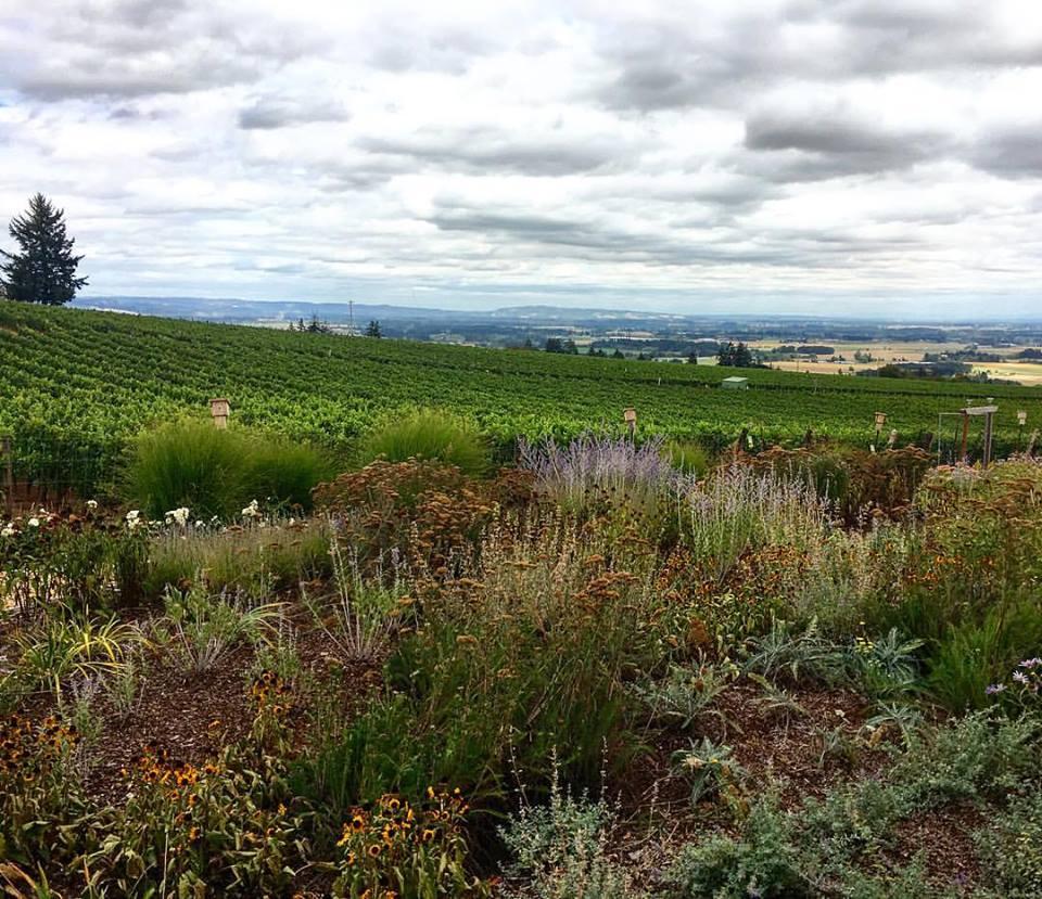 Brooks Winery outside Portland, Oregon