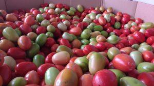 local tomatoes Kelowna