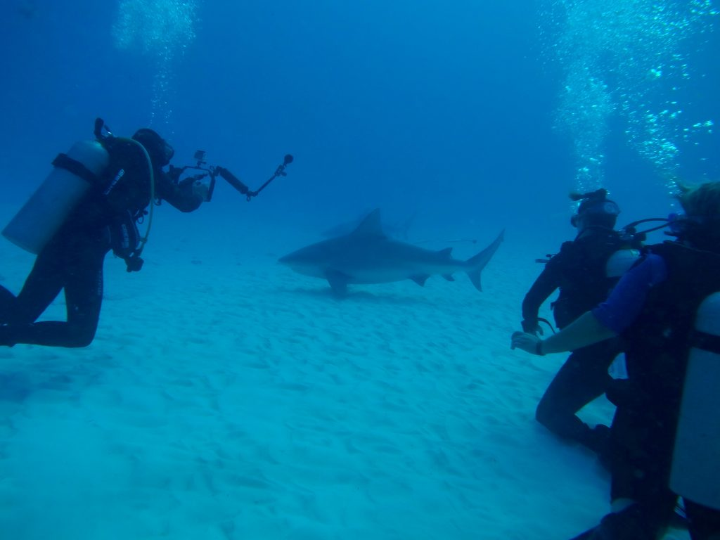 Scuba Dive with Bull Sharks at SharkSchool