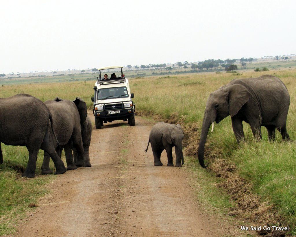On Safari in Africa! Baby Elephant Crossing the Road