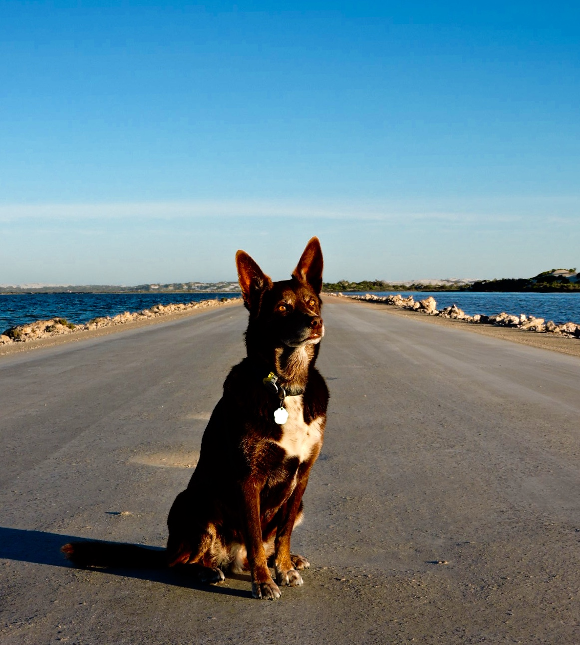 What I Learned about Love, I Learned from my Dog, AUSTRALIA