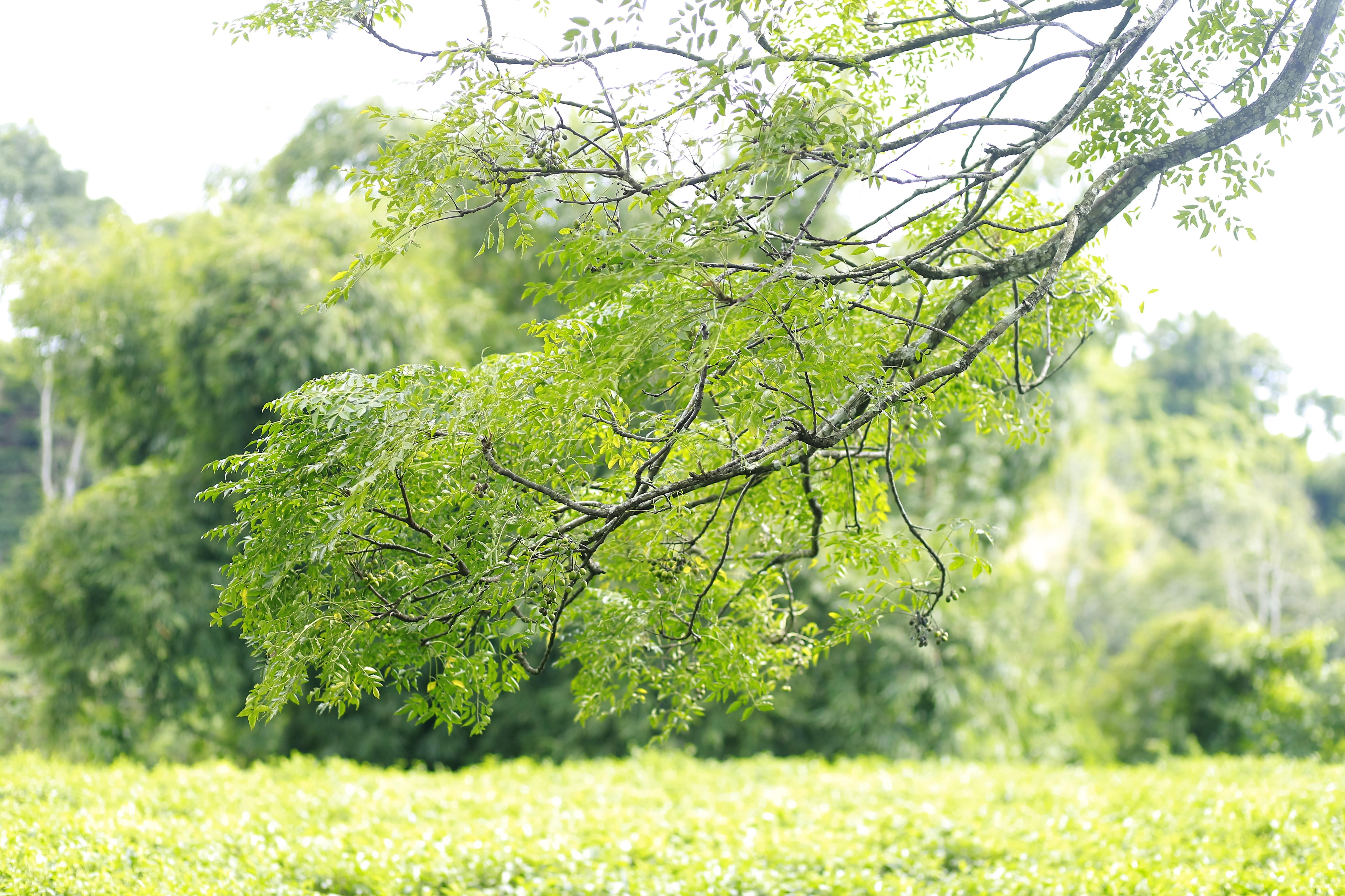 Tea Garden, Hajarikhil, Fatikchari, Chittagong, Bangladesh