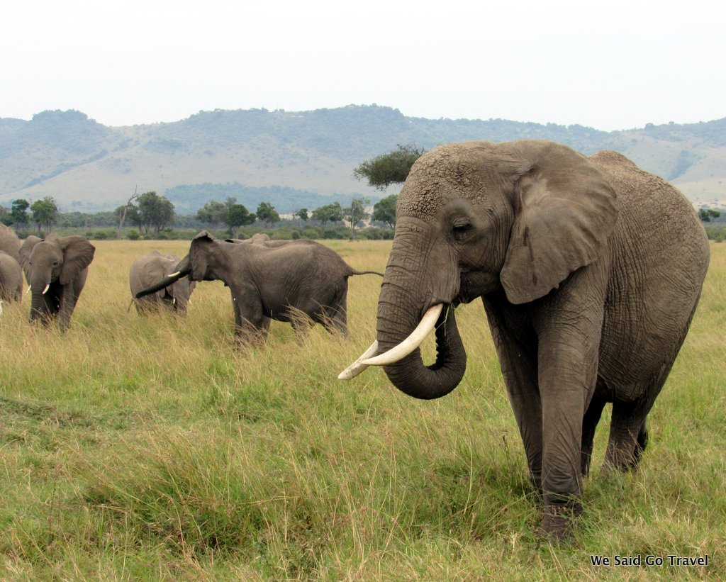 Are You Ready? Today We Are Going to the Serengeti!