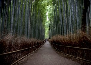 Fifty Shades of Green in Kyoto, Japan