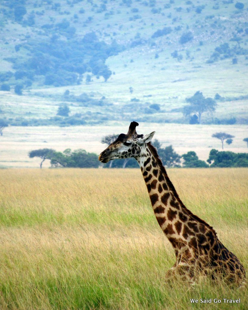 Giraffe by Lisa Niver in Kenya #AKTravel