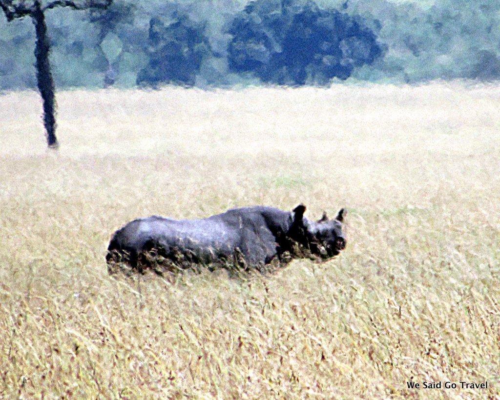Black Rhino by Lisa Niver Kenya #AKTravel