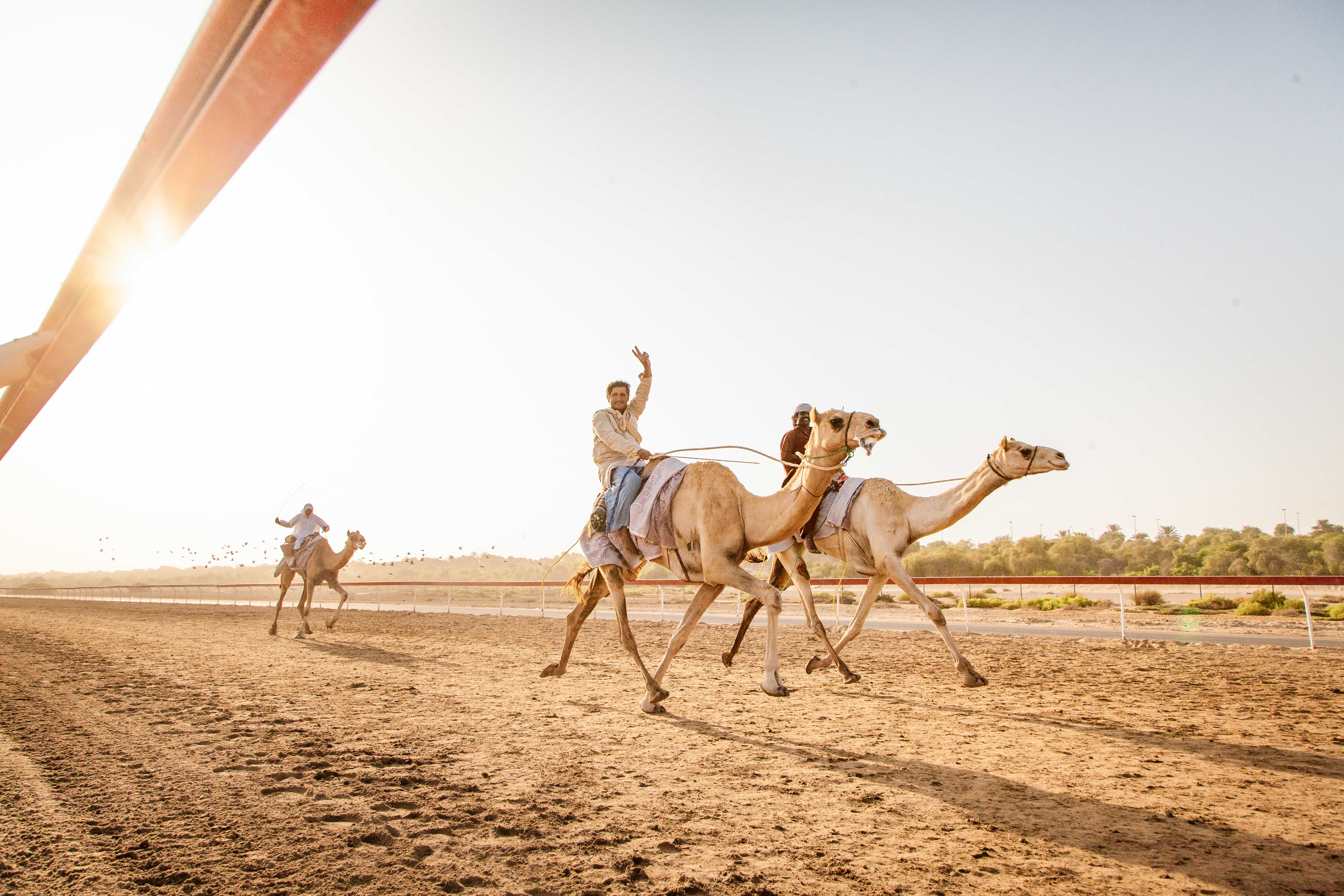 A morning at the camel race track, The United Arab of Emirates