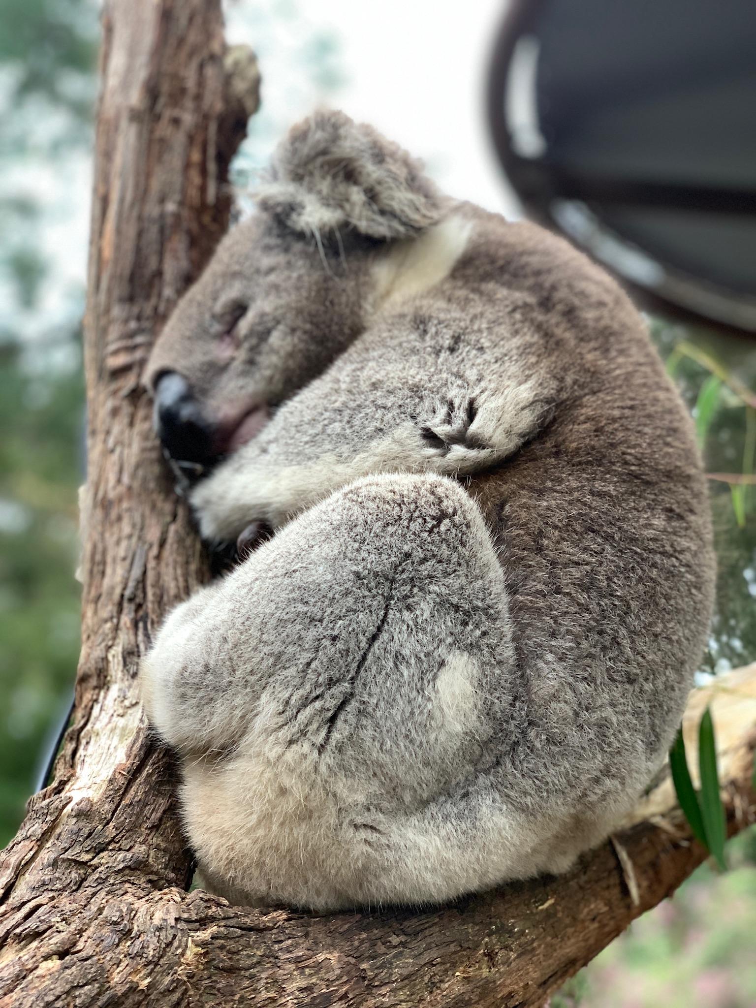 Not Impressed – Australia
