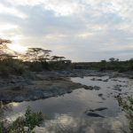 Hippo Pool in Tanzania by Lisa Niver